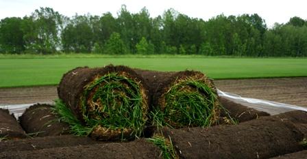 Рулонный газон. Продажа и укладка готового газона в рулонах.