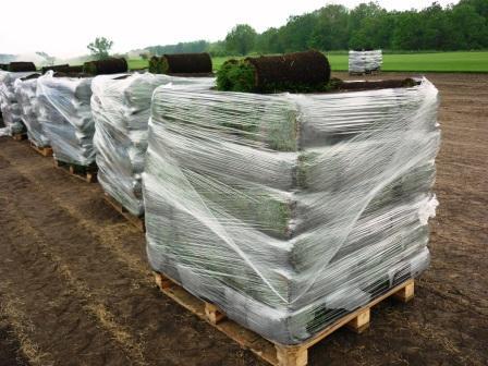 производство рулонного газона челябинск