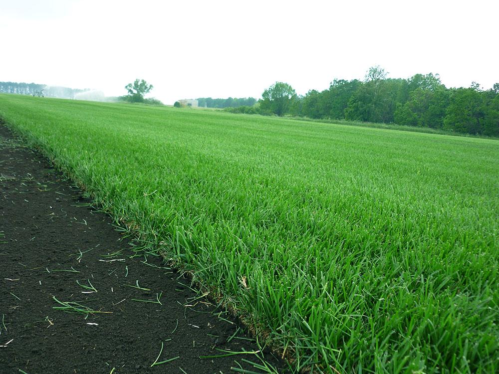 рулонный газон в челябинске